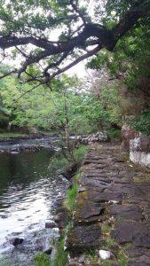 NP-Killarney